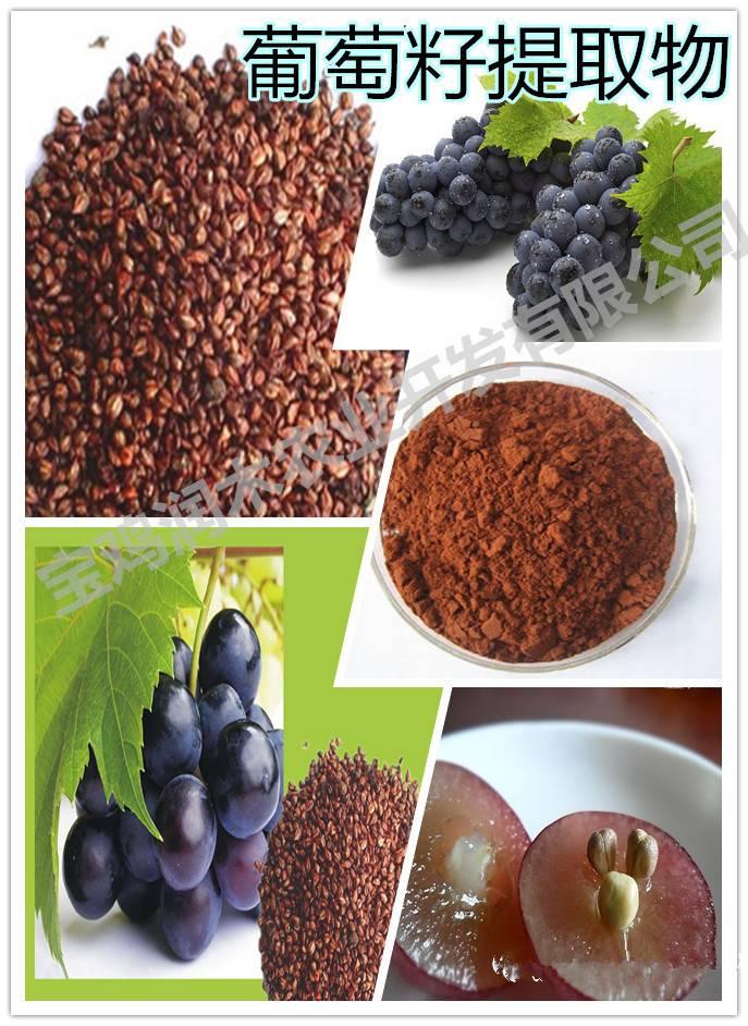 beverage ingredients grape seed opc 95%