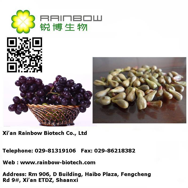 Top quality grape seed extract supplement