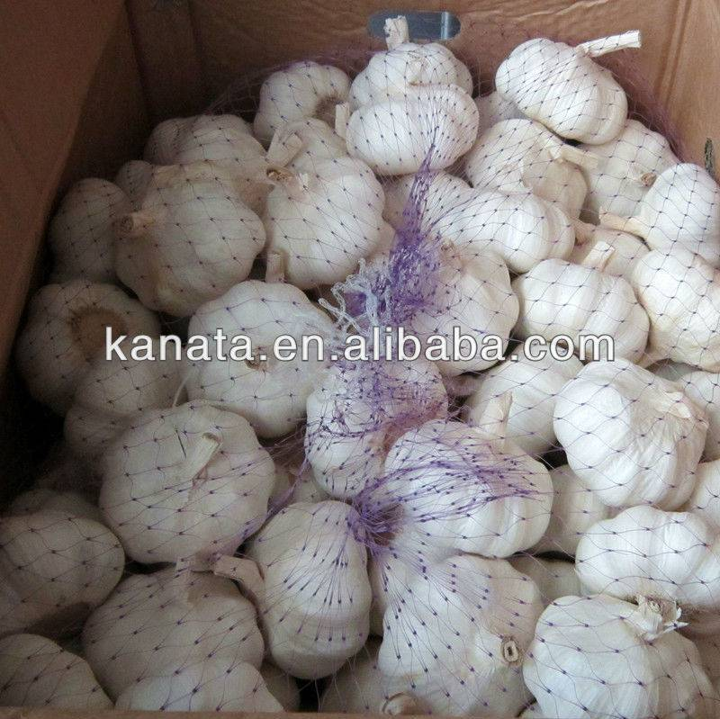 high quality china fresh garlic supplier