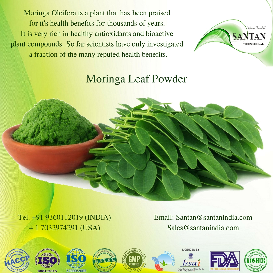 Moringa Oleifera Powder