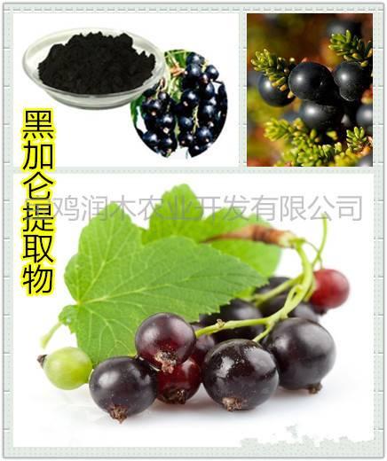 beverage ingredients black currant anthocyanidins 25%