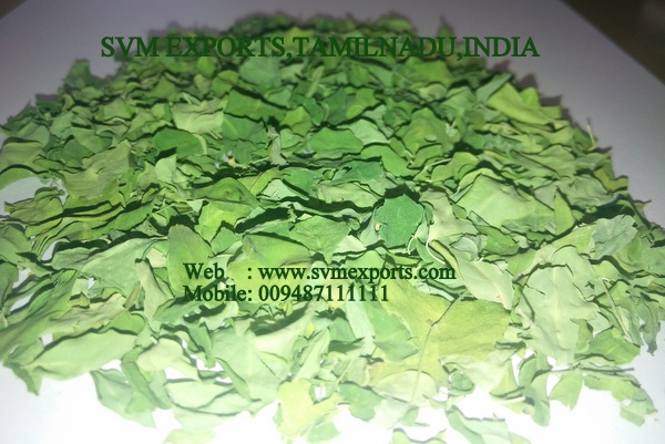 Nutritional Moringa Dry Leaves Exporters India