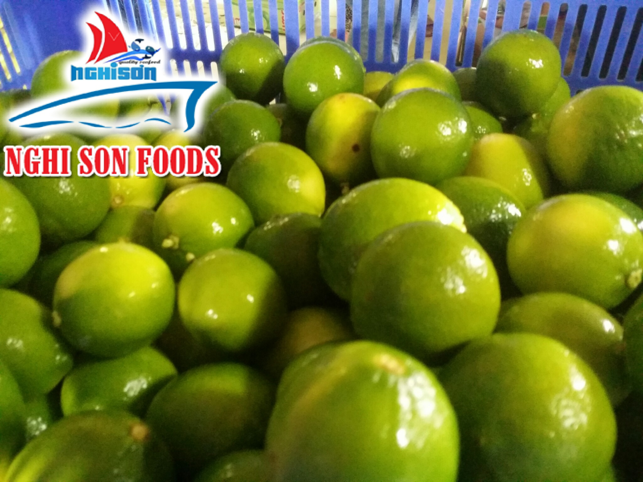 Fresh Seedless Lime from Vietnam