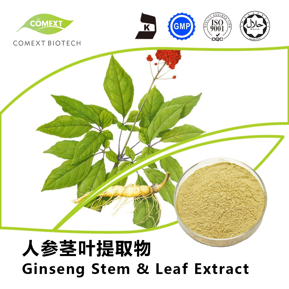 Pesticide Free Panax Ginseng Leaf Extract Ginsenosides 80% UV