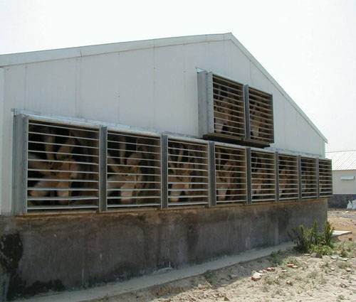 """50"""" box fan  for poultry house"""