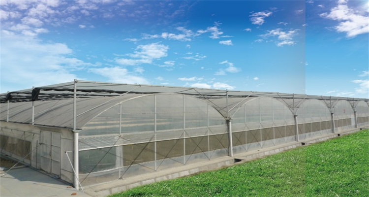 Commercial Agricultural Arched Multi span Greenhouse film greenhouse