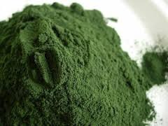 ULVA LACTUCA / GREEN SEAWEED (POWDER) Animal Feed and Fertilizers