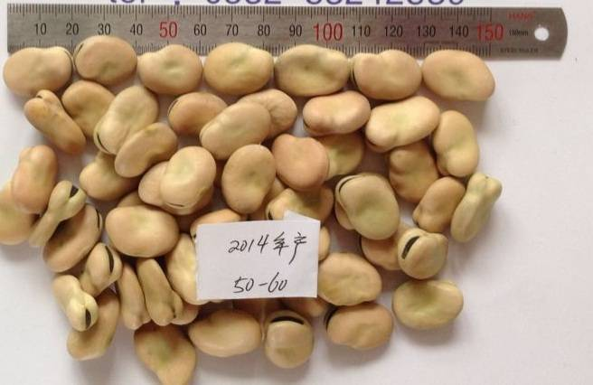 new crop 2014 dried broad bean