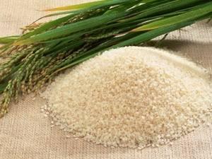 Vietnam Long Grain Rice 15% Broken Best Price