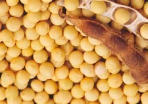 Soybean extract /Soybean Isoflavones Extract/P.E