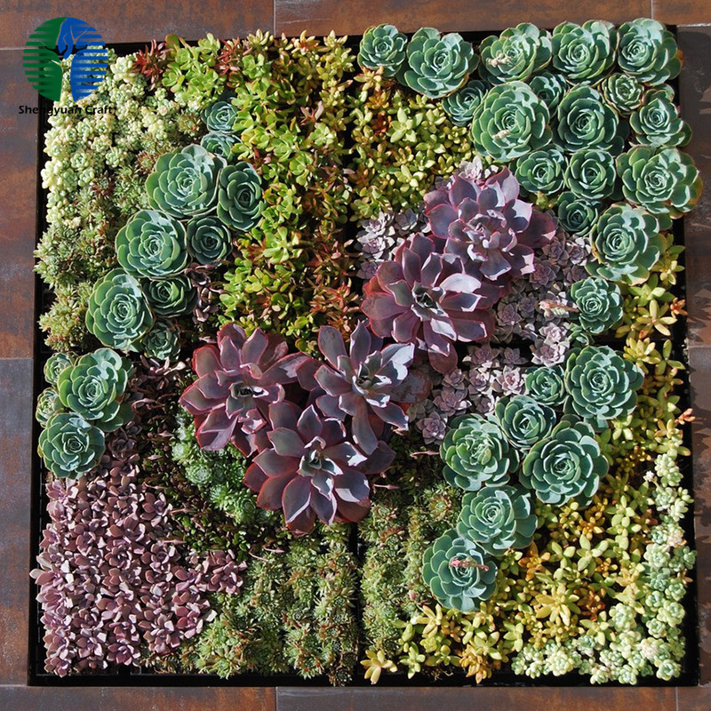 Indoor wall decorative artificial succulent frame