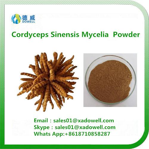 High quality Cordyceps Sinensis Mycelia Powder