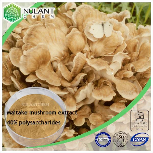 Maitake mushroom extract polysaccharides 40%