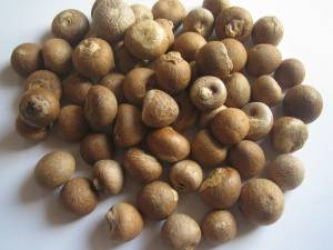 Betel Nuts - Whole Dried 70% - 75%
