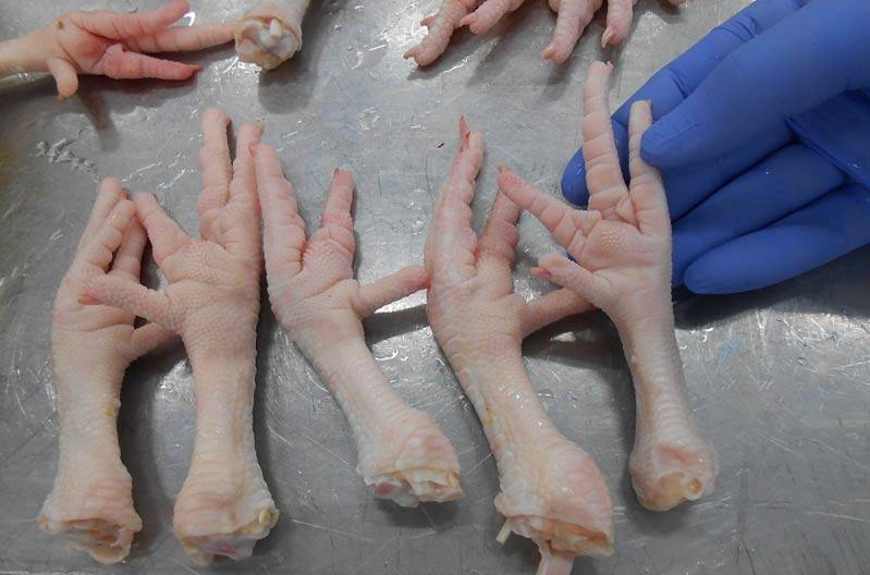 Grade A Frozen Chicken Feet, chicken Paws, Breast, Whole Chicken, Legs and Wing