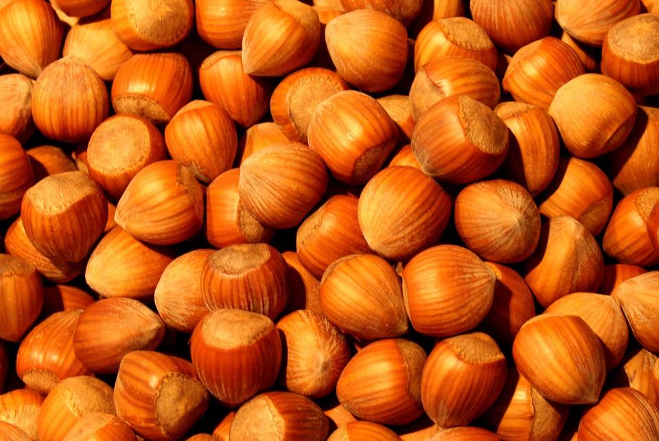 best quality hazelnuts for sale