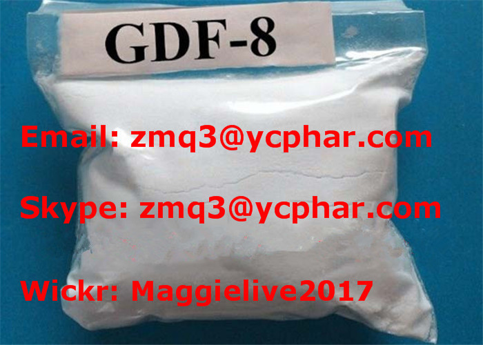 Myostatin Human Growth Peptides For Muscle Growth Differentiation Factor 8 GDF-8