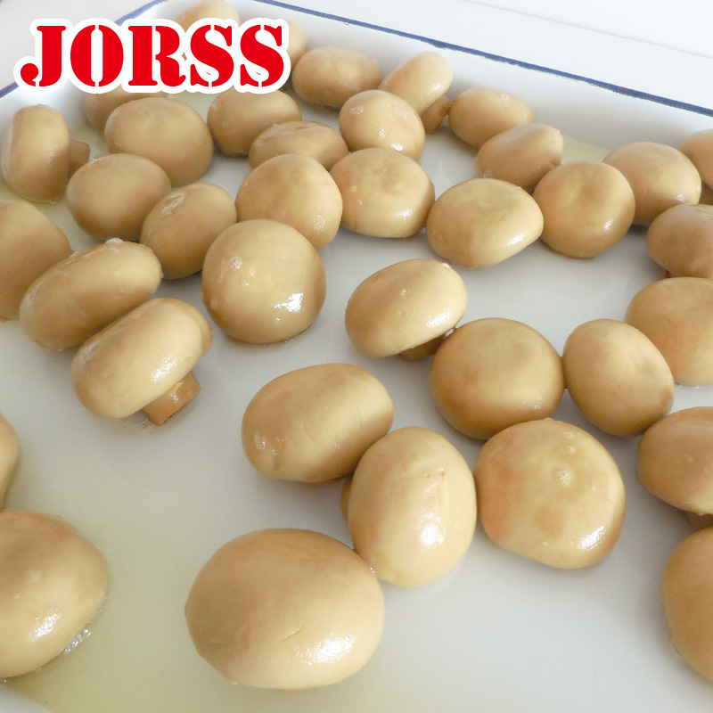 China high quality canned mushroom whole champion mushroom 2840g pns 400g large factory supply