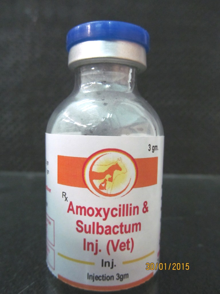 Veterinary Amoxicillin Sulbactam Injection