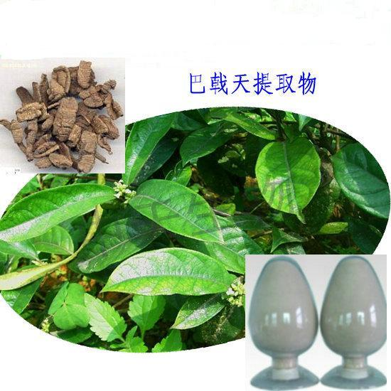 100% pure natural Morinda officinalis extract,Bacopin extract