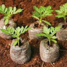 Garden Planter Liners/Decorative coco liner planter for basket