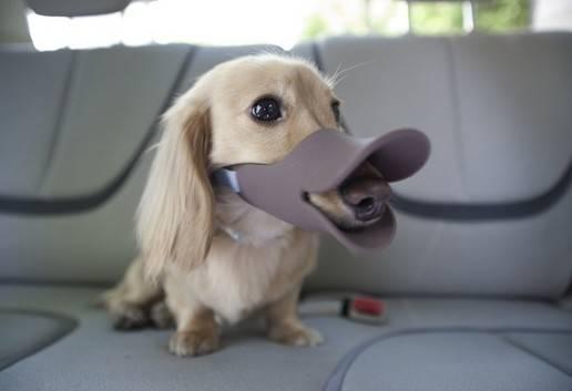 Fashionable Market Silicone Dog Muzzles for Pet Dog