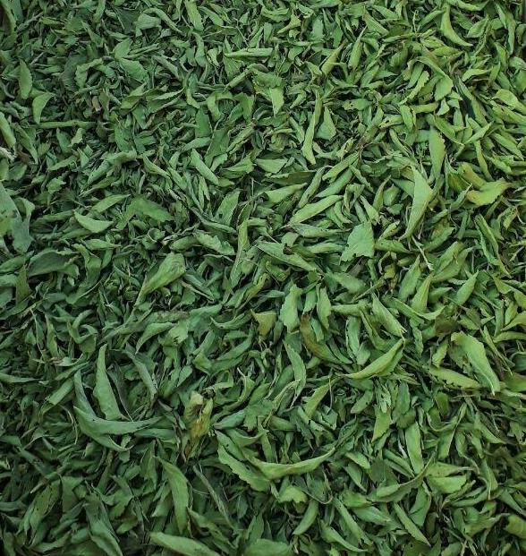 High Quality Dried Stevia