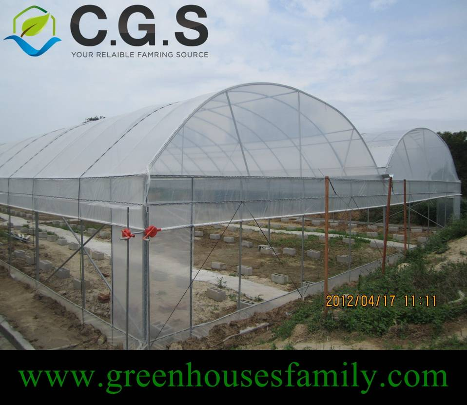 Commercial Galvanized Gutter Connected Greenhouses