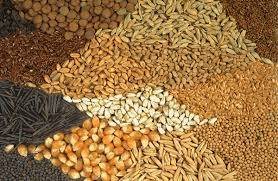 All Types Of Seeds In Stock