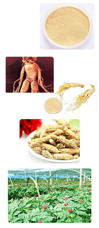 Low pesticide residues American Ginseng Extract ginsenosides