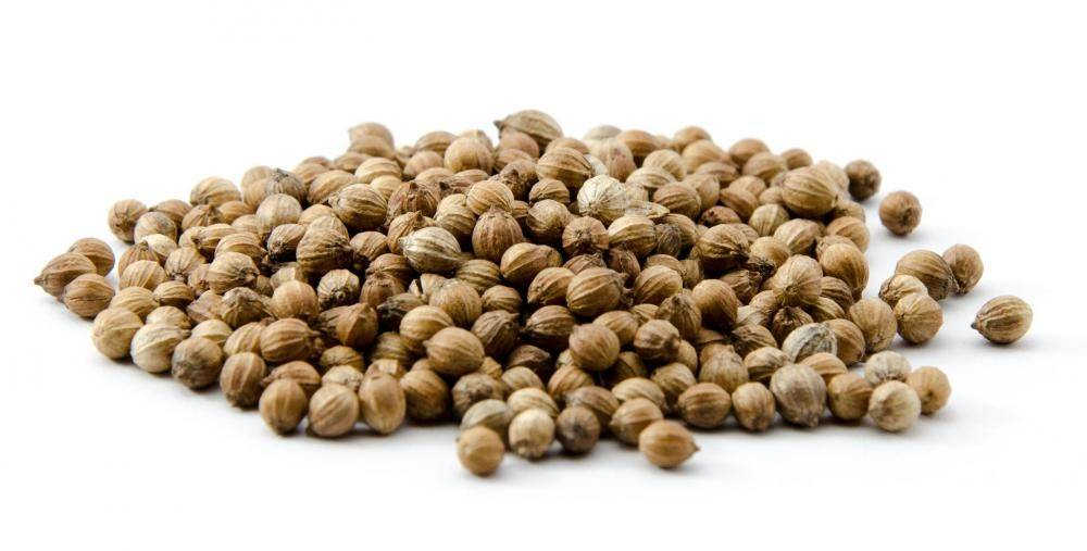 Corainder Seeds from Ukraine