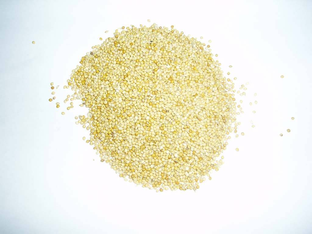 Chinese Millet in HUsk