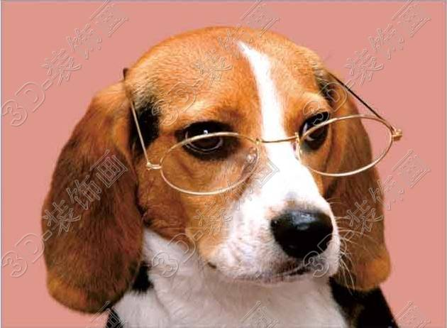 Cute dog PET lenticular home decor 3d poster