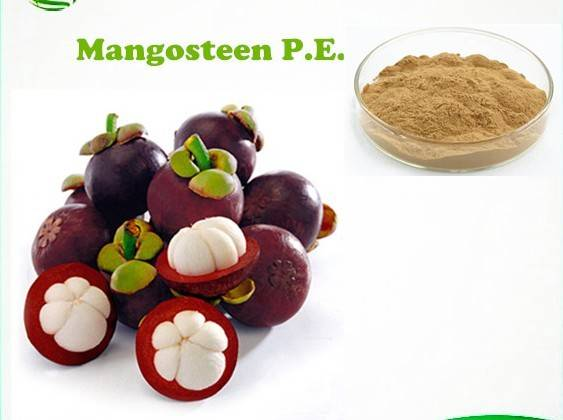 Natural Mangosteen Extract/Dried Mangosteen Rind