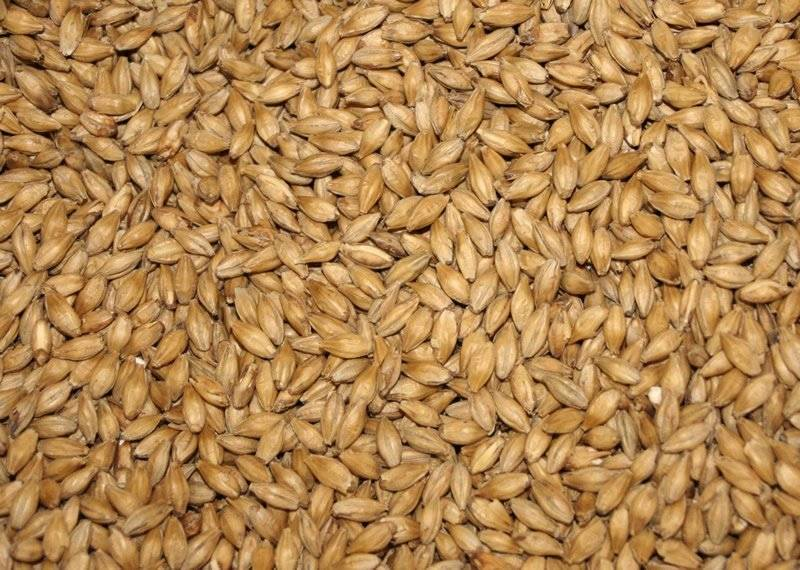 Barley Animal Feed