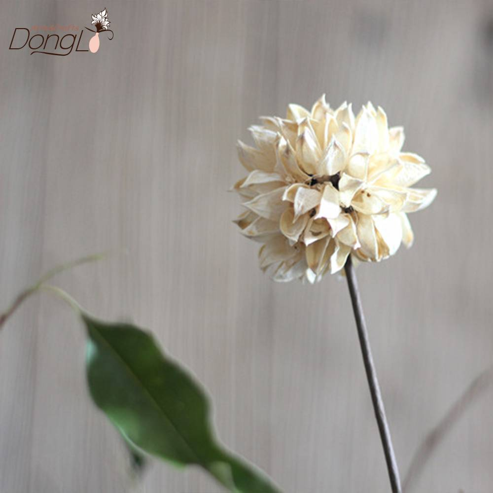 Hibiscus sabdariffa linnroselle dried flower wuhan dongli arts hibiscus sabdariffa linnroselle dried flower izmirmasajfo