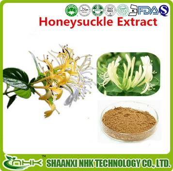 GMP standard China supplier high quality natural and pure Honeysuckle Extract