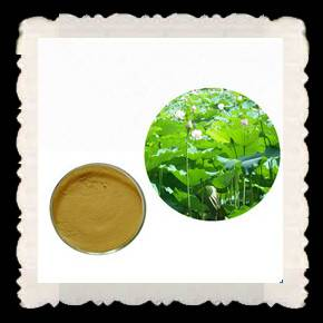 Natural Dendrobium Extract Powder
