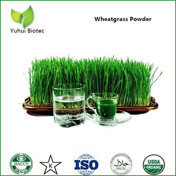 wheatgrass powder ,organic wheatgrass powder,wheat grass powder