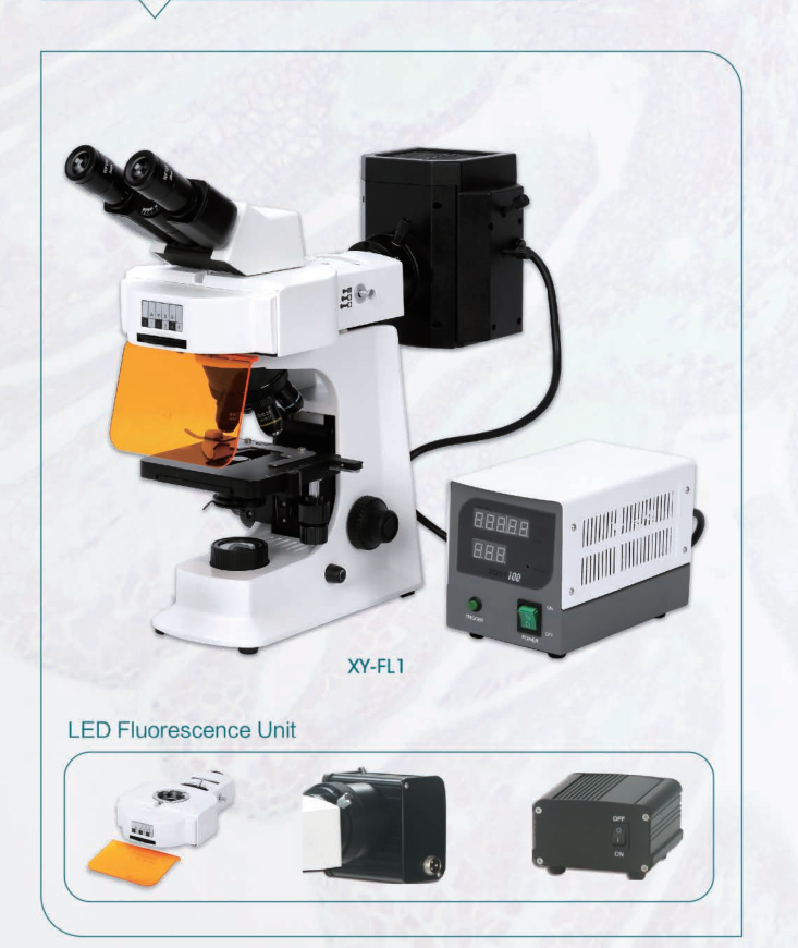 Fluorescence biological microscope good microscope supplier