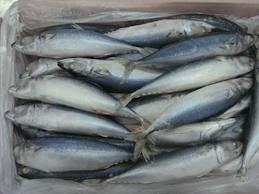 best quality frozen mackerel an salmon fish