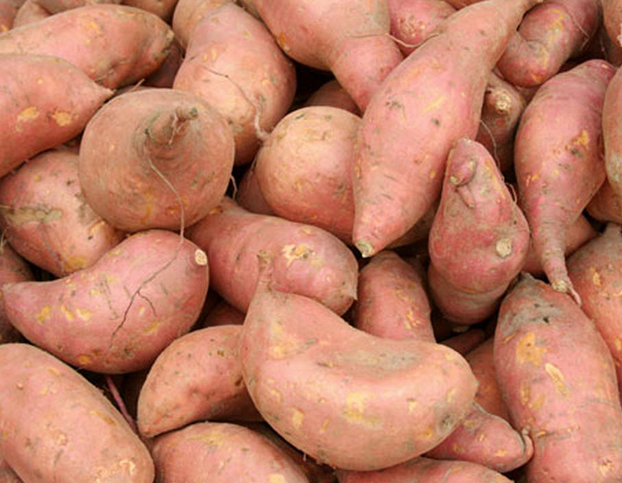 fresh sweet potatoes for sale