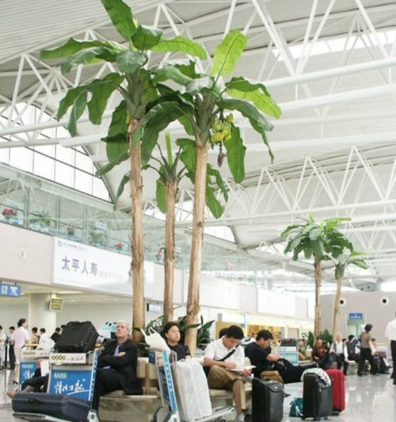 Guangzhou manufacturer sell indoor imitated artificial fake big decorative wooden banana tree
