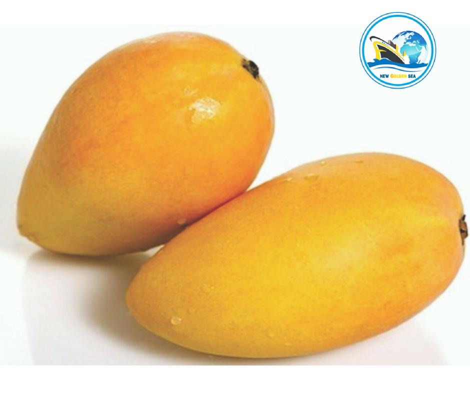 Best Quality Mango in Vietnam - Fresh Hoa Loc Mango