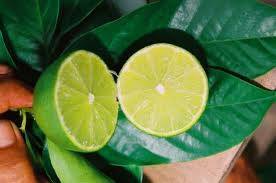 BEST GREEN LEMON PRICE