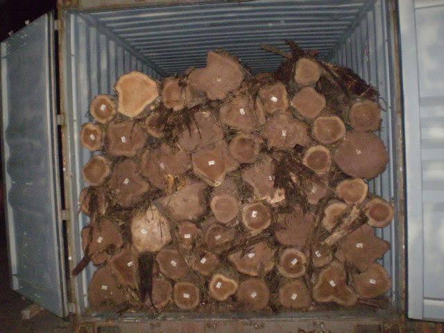 Wood teak logs