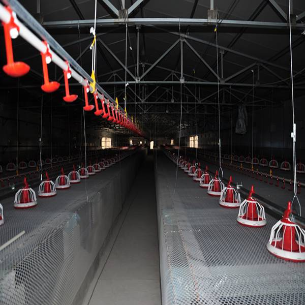 Popular full automatic used broiler poultry farm equipment