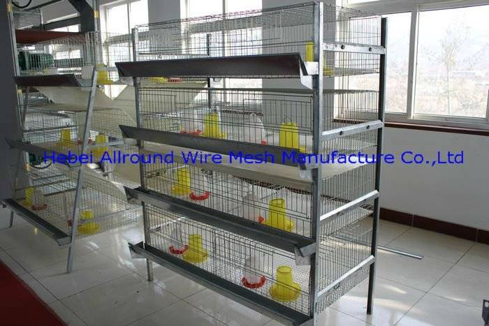pullets breeding cage