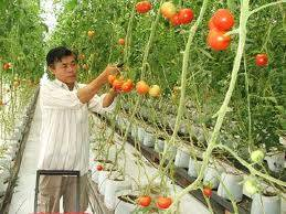 Agriculture Worker Vietnam