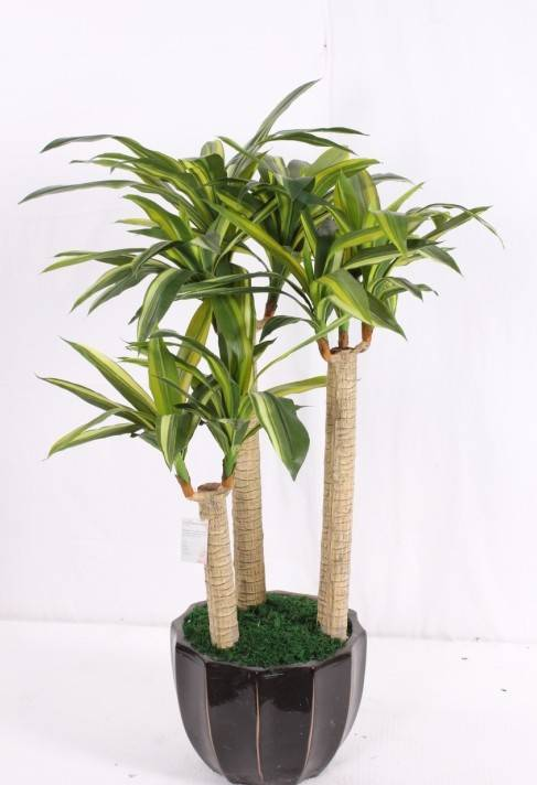 Artificial single Yemen Brazil for indoor&outdoor decoration
